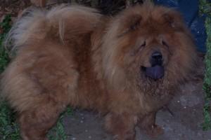 Tosca(1)