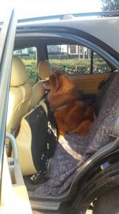 Chauffeur, à la maison!