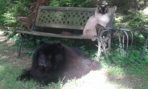 Vichnou et Bacchus