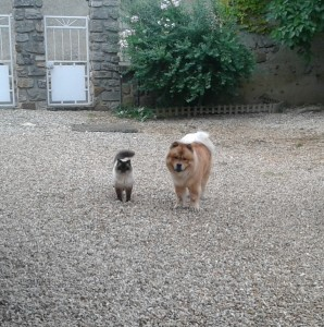 Gimmy et Bacchus