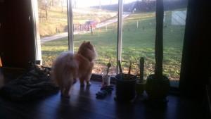 C'est MON terrain vu depuis MON salon que je peux contempler depuis MON tapis!