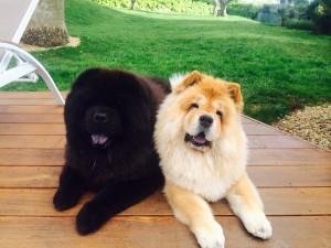 Soko et Casumi