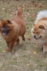 Deux copains, Lion et Gimmy