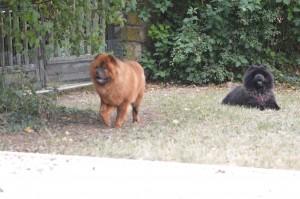 Lion et Luna
