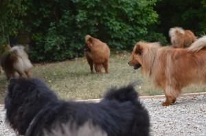 Lion et ses copains: Paco, Stuppa (de profil), Wen Laï (fesses de gauche), Altaï (fesses de droite)