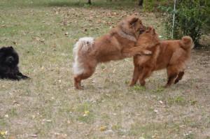 Lion et Lili, Luna arbitre.