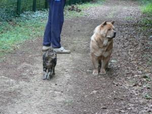 Ecoute bien Ginger, à ta gauche, il y a une proie!