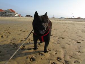 Il m'en est arrivé des aventures, j'en ai fait des voyages, avant de pouvoir fouler le sable des plages basquaises!