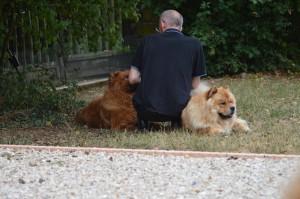 Émotion, Frédéric avec deux chows aimés, Gimmy et Lion