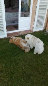 Gigi et Fiocco
