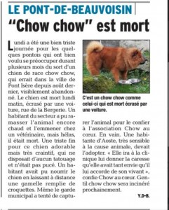 Art Chow chow