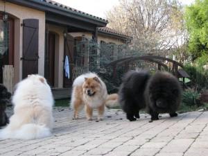 Nous voici entre amis : Imaé, Igor, moi et Blue ! On s'entend tous bien ! Ce sont de super amis !