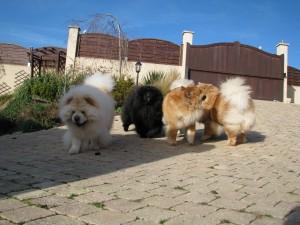 """""""Qui m'aime me suive !"""" Et toujours avec mes amis, Igor, Imaé et Gallia !"""