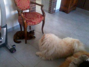 Fiocco et Gigi